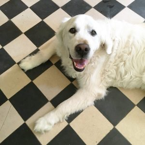 Top 5 – Naturkosmetik für Hunde