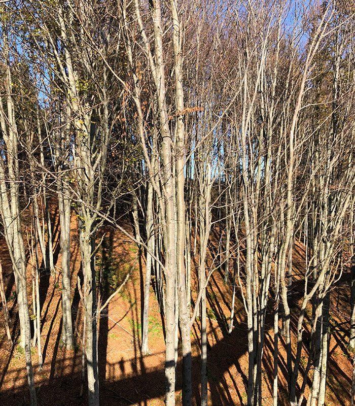 Der Wald aus der Vogelperspektive. Ganz schön überraschend.