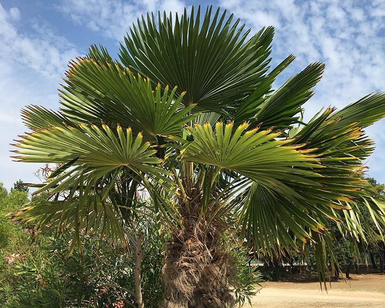 Urlaub mit Sonne, Sand und Palmen