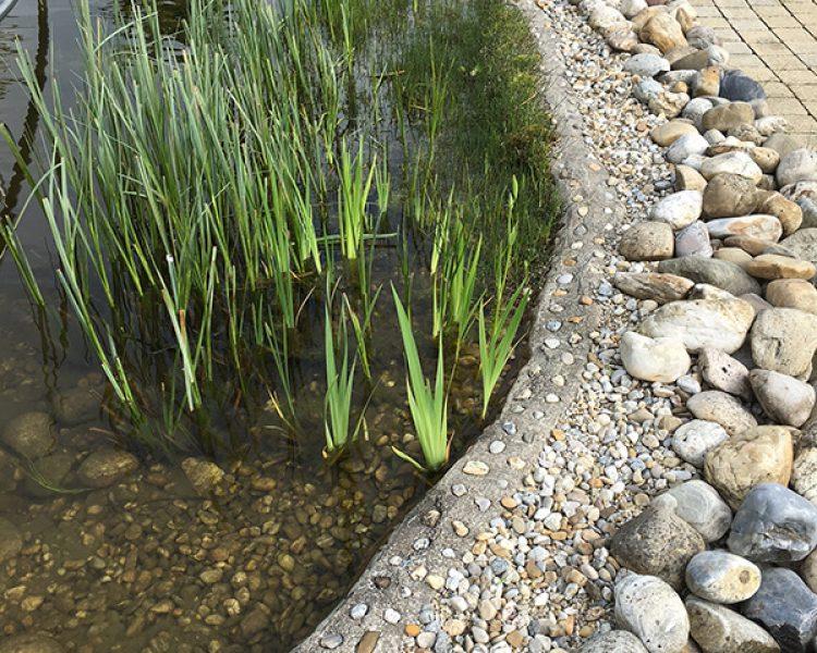 Natur pur: das Ufer des hoteleigenen Naturbadesees